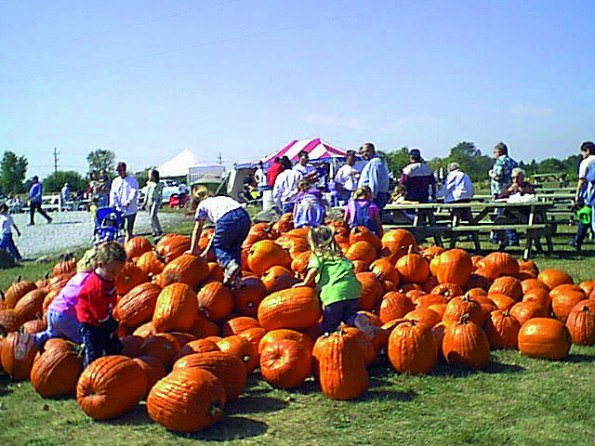 The pumpkin patch at Beasley's Orchard in Danville.
