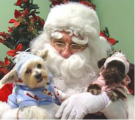 PAWS Pet Photos with Santa, Nov. 10