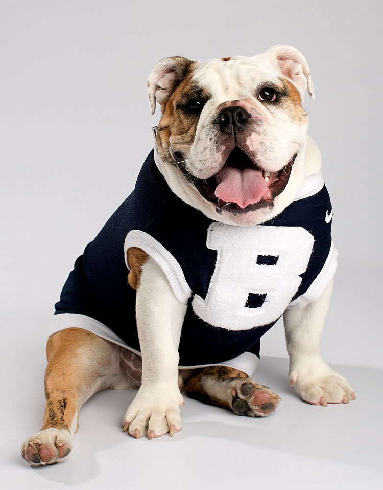 Butler University Mascot to Retire in March | Around Indy