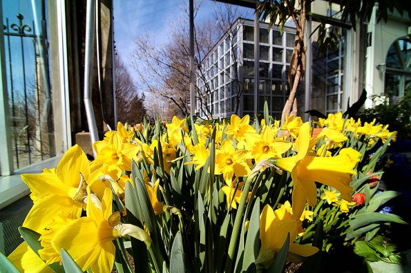 Spring Bulb Show