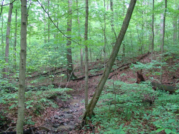 Meyer Preserve in Morgan County