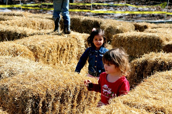 Straw maze at the Maple Syrup Festival