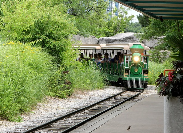 Riding the Zoo Train in the Plains Area at the Indianapolis Zoo.