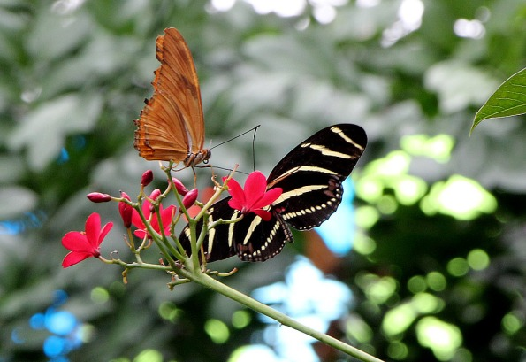 Butterflies Exhibit at White River Gardens.