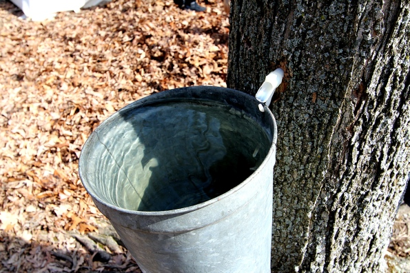 national-maple-syrup-festival-sap